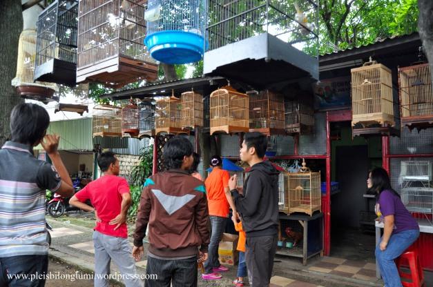 bird shop