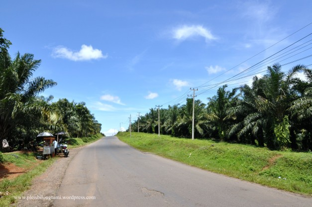 cigudeg oil palm plantation3