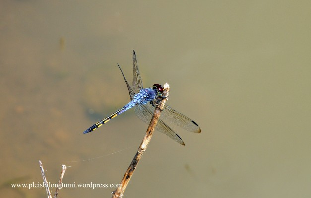 dragonfly2