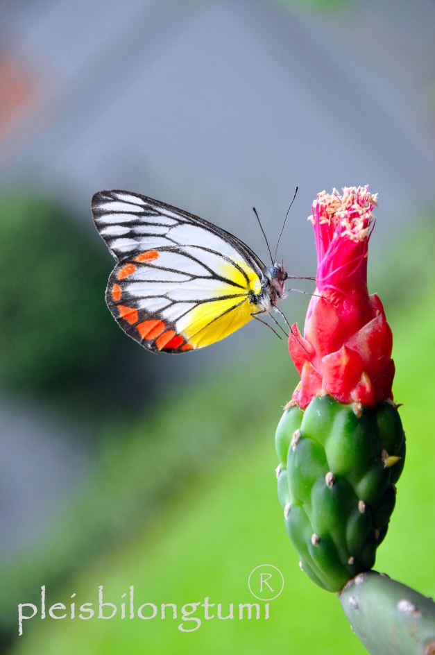 butterfly-69