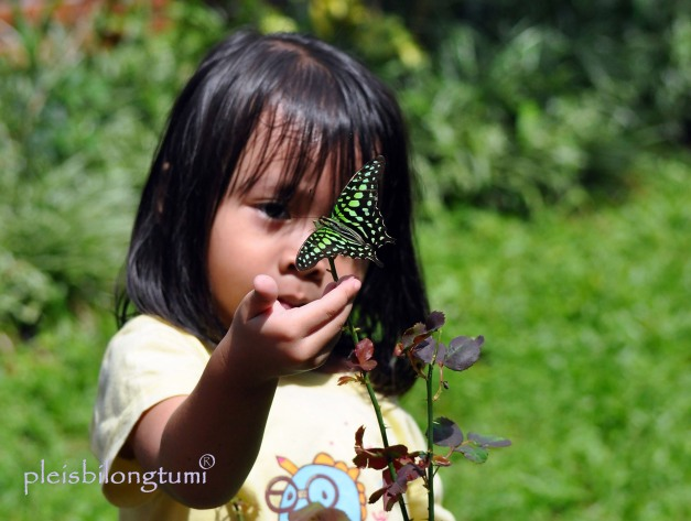 cropped butterfly-2