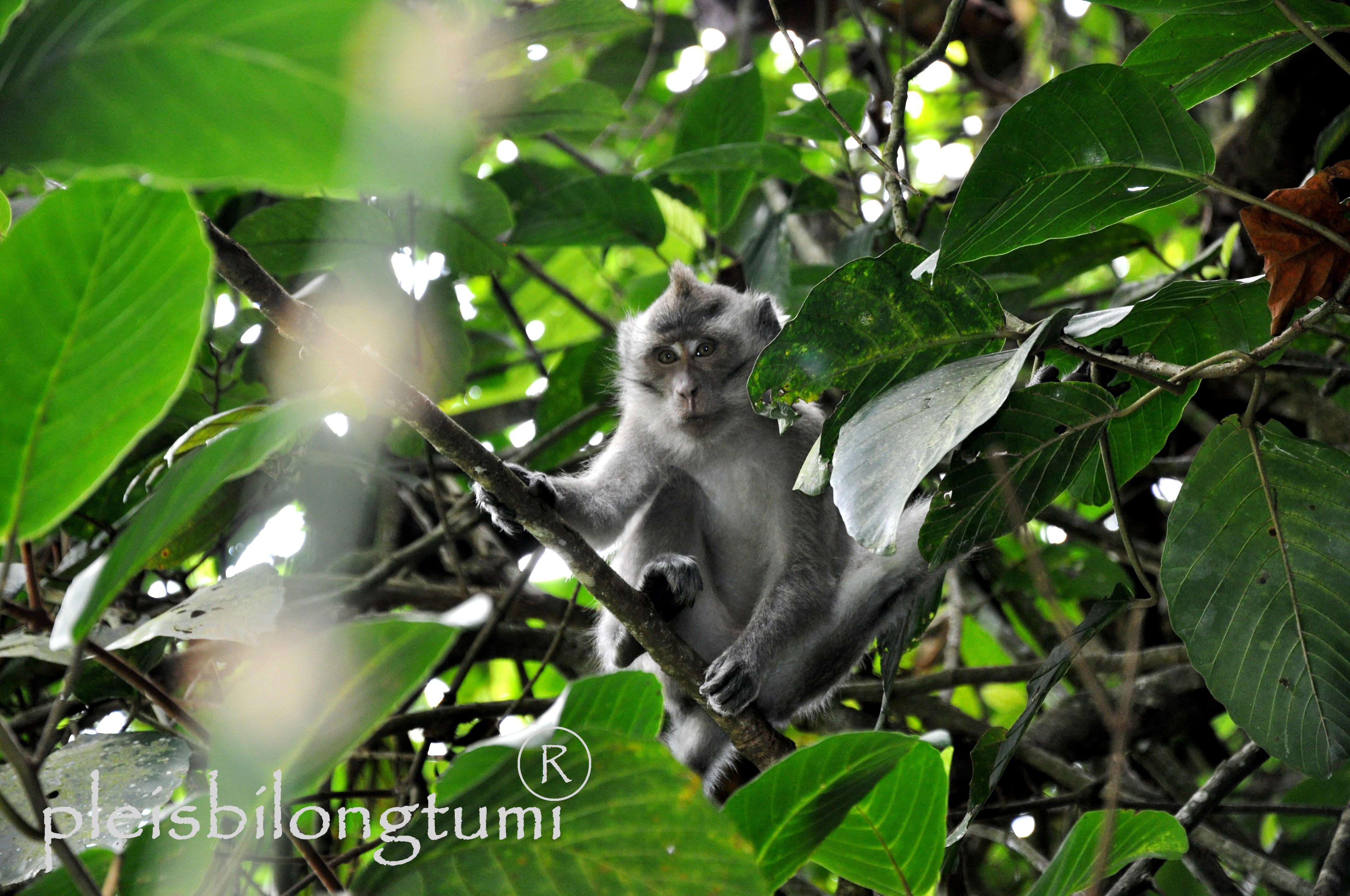 NATURE WILD LIFE CIGUDEG Pleis Bilong Tu Mi Page 21