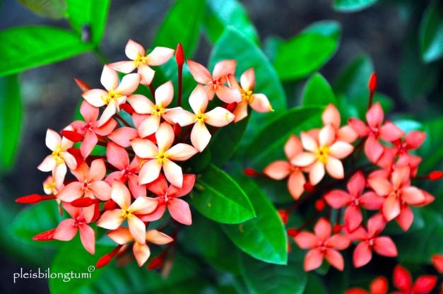 soka orange