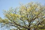 bigtree-1