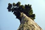 bigtree-5