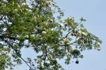 bigtree-6