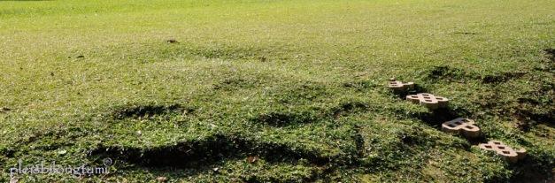 jangan lupa rumput di bumi