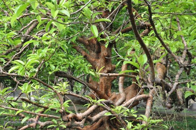 tree-ss