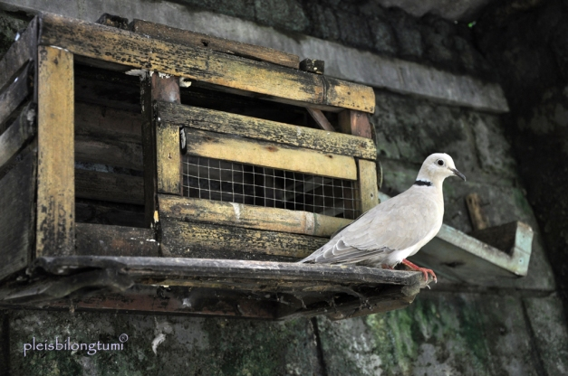 birdhouse-1