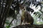 straycat-3