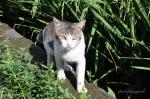 straycat-5