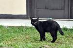 straycat-8