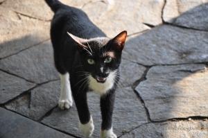 straycat-9