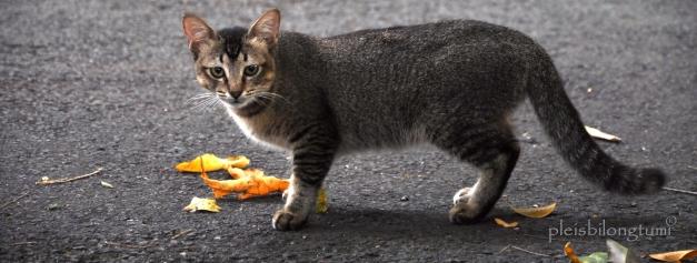 the straycat