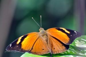 butterfly-106