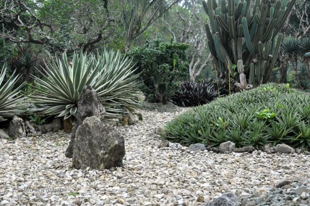 green cactus garden