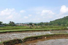 riceplanting-3