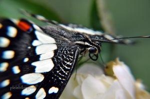 butterfly-47