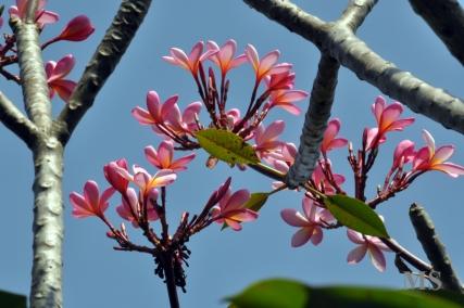 FLOWERING FRIDAY