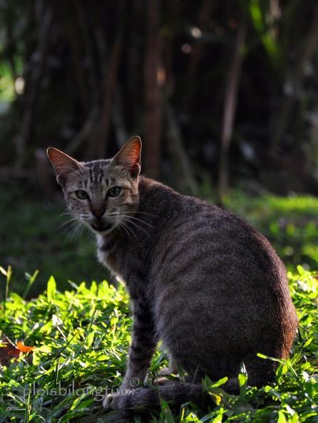 straycat1