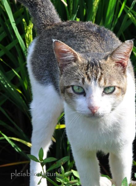 straycat2