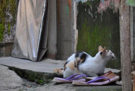 straycat3