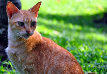 straycat4