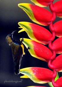 sunbird2