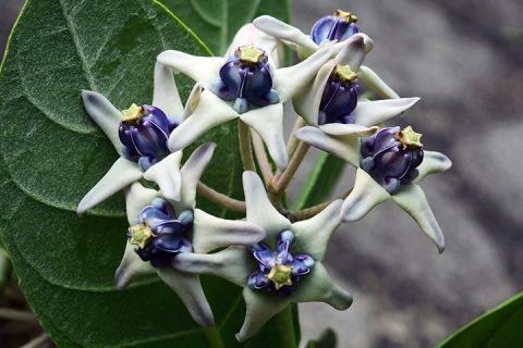 crownflowerfor blog
