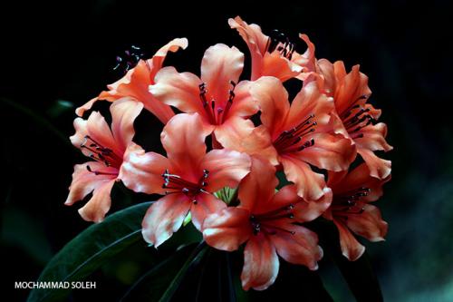 FLOWERBLOG4